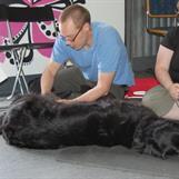 Björn masserar Vessla.