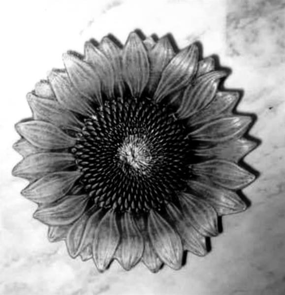 Solrosskål