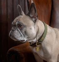 Hundhalsband Digby & FoxTweed/Läder XXS