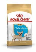RC Chihuahua Puppy 1,5 kg