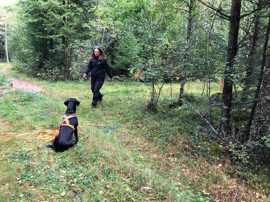 Hund väntar medans skottplatsundersökning görs