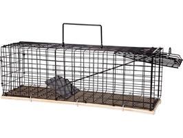 Burfälla Råtta