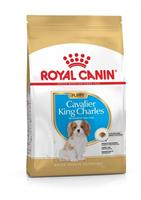 RC Cavalier King Charles Puppy 1,5 kg