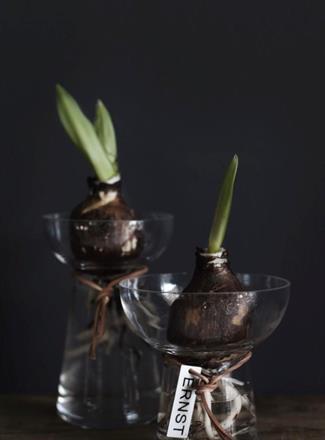 ERNST hyacintvas