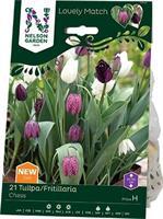 Tulpan/Fritillaria LM Chess
