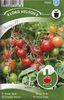 Tomat, Kruk-, Bitonto F1