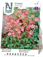 Rosettoxalis, Iron Cross, rosa