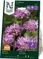 Allium Eros, rosa