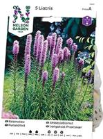 Rosenstav, Liatris spicata, lila