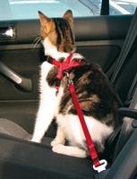 Bilsele Katt röd
