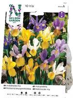 Iris, Holländsk, bland. färger