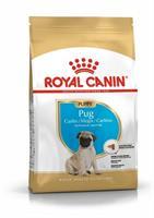 RC Pug Puppy 1,5 kg