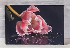 Tavla canvas foto Tulpan