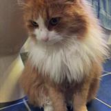 Stina liker seg på badets varmekabler