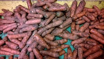 Porkkana, multa 1 kg, luomu