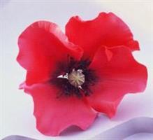 Utstikker Poppy (valmue) stor KB