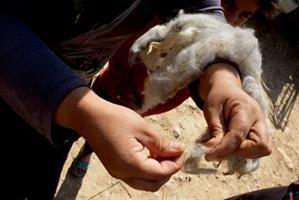 27 spinning av ull