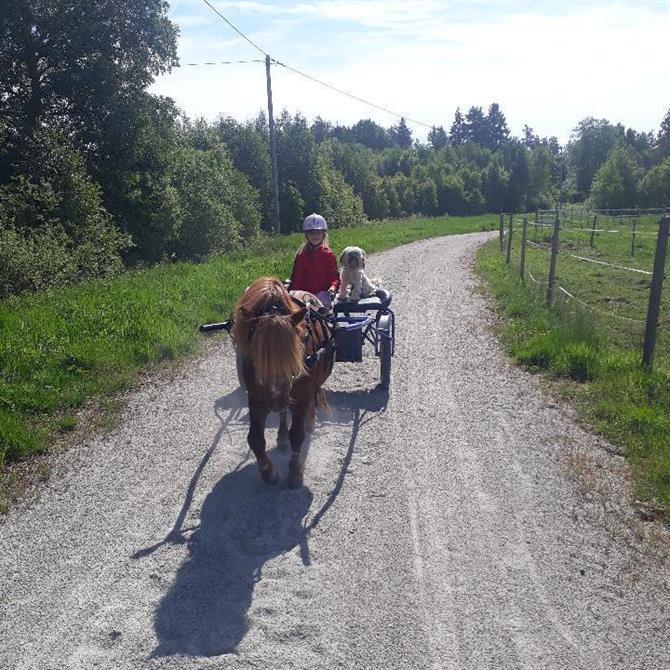 Liten rockardvagn för ponnykörning