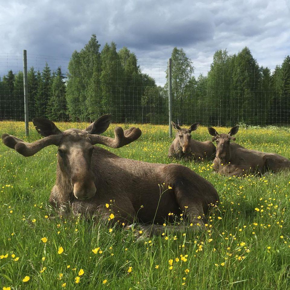 Värmlands Älgpark