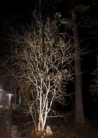 Belysning av träd