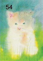 Pieni kissa-kortti