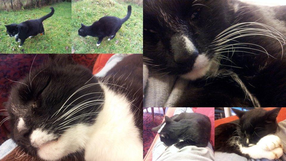 Jeg har nettopp passet Samuel i to uker. Han er egentlig en katt som er ute om natten og inne om dagen.