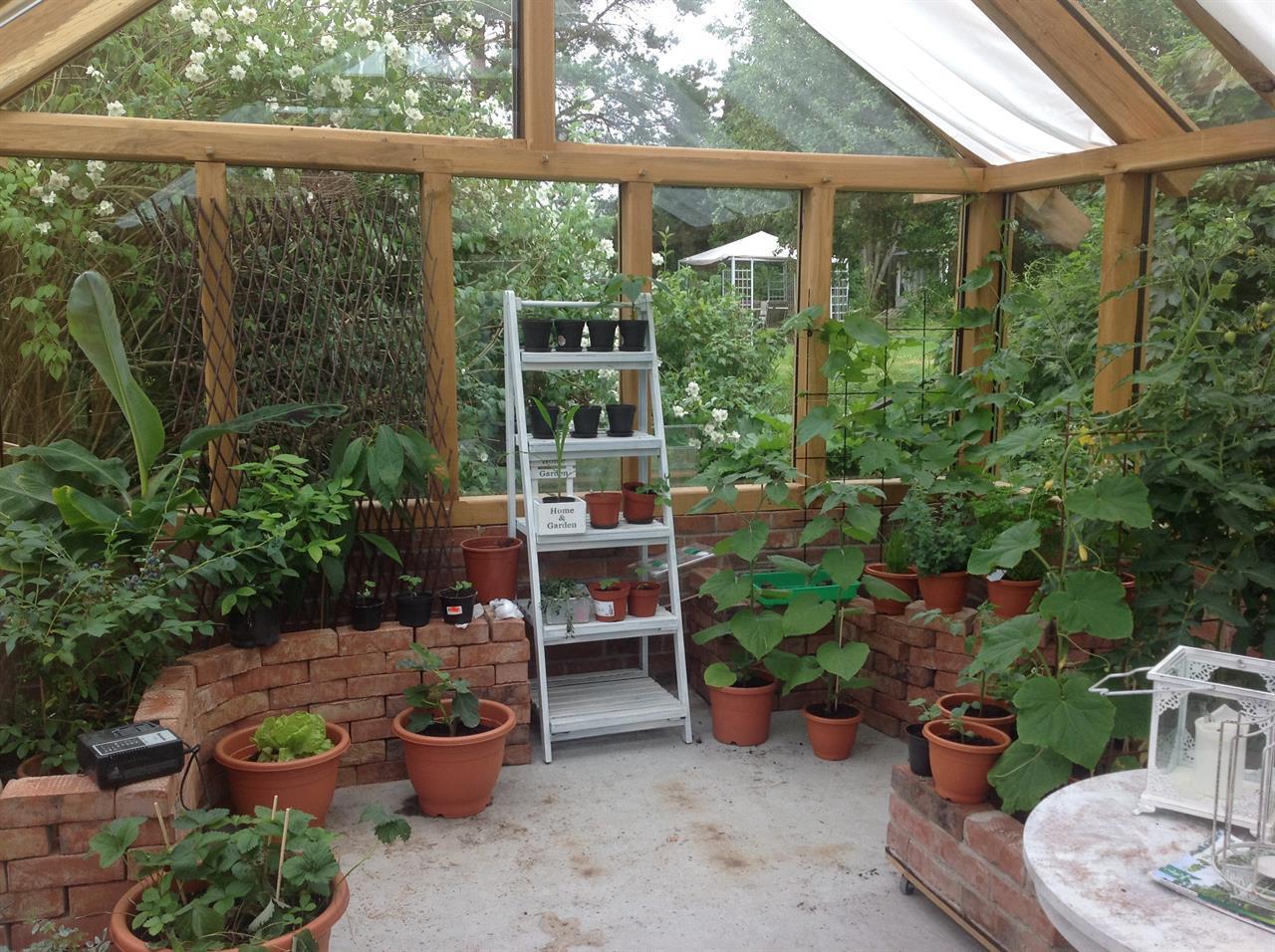 Ekstomme o tegel i växthus