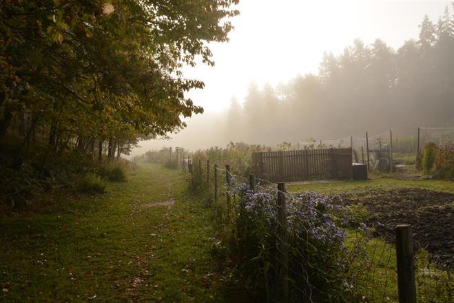 Dimman kvar