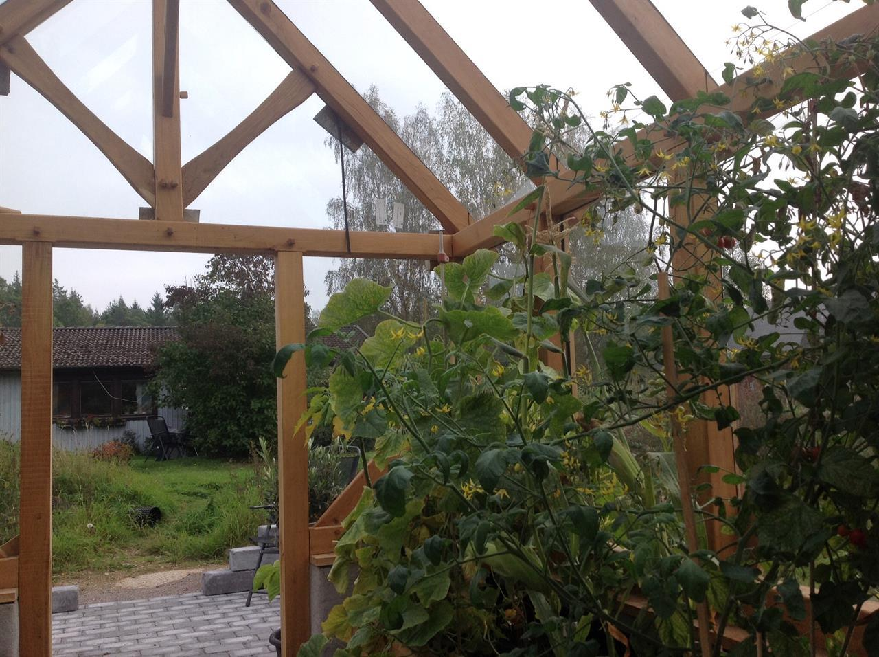 Bild  växthus