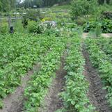 Vy över området, potatisland i förgrunden