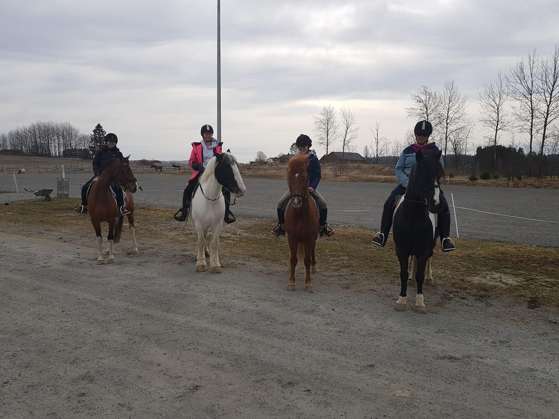 Rideskolehestene