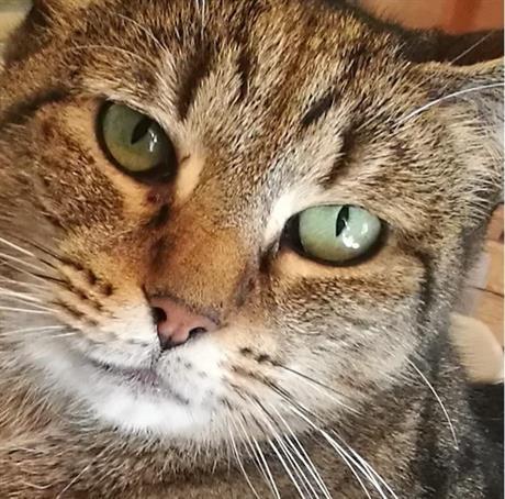 Kattevandrerens Dyrepass