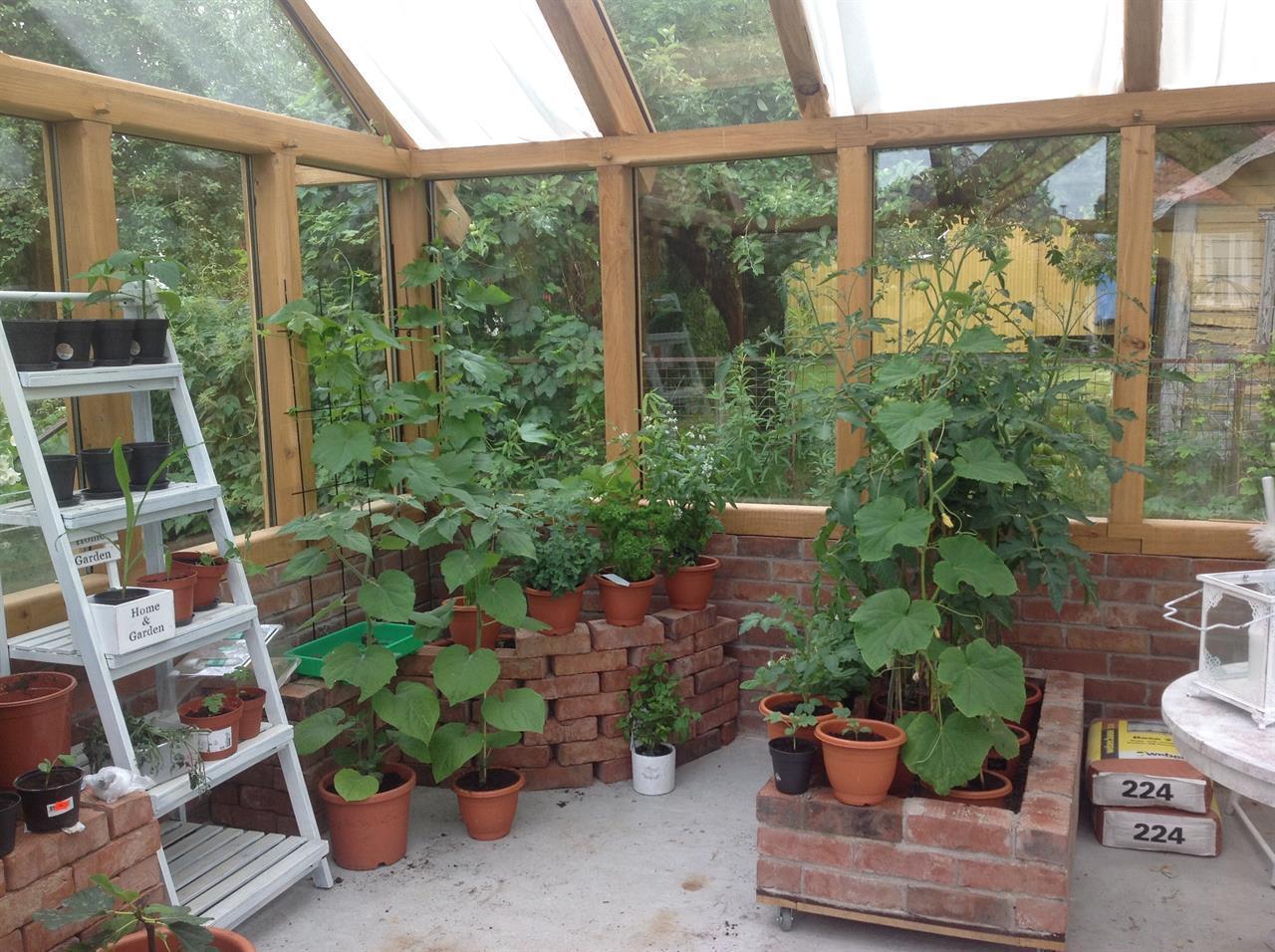 Växthus i ek
