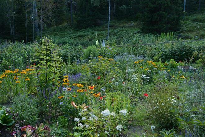 Blommor och grönt
