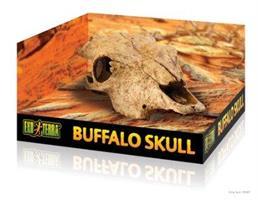 Kranium Buffel