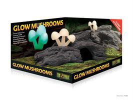 Grotta med svampar