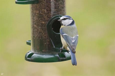 Tidig fågelmatning