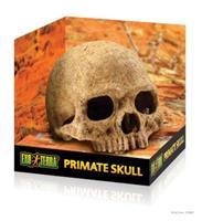 Kranium Primat