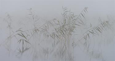 2 Luontokuva Canvas -taulu