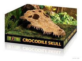 Kranium Krokodil
