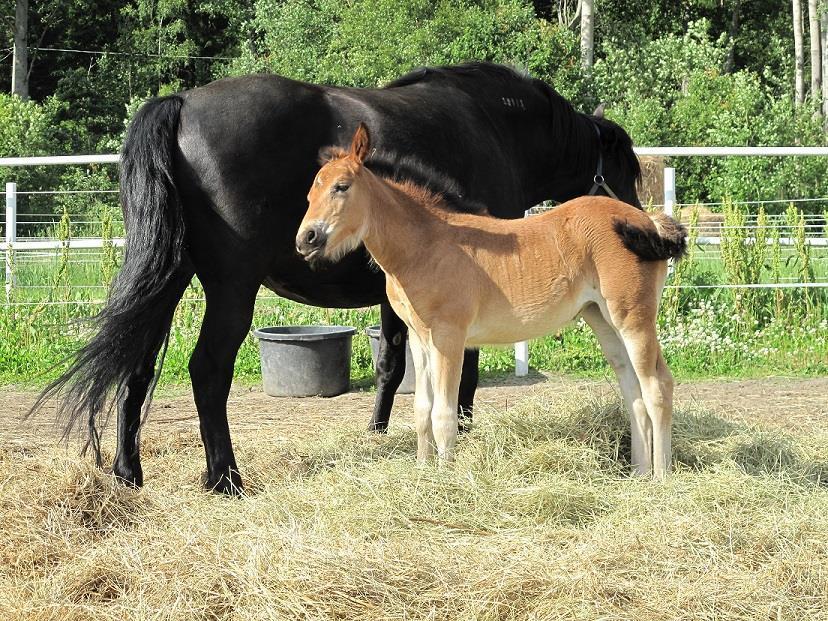 Sandras Häst
