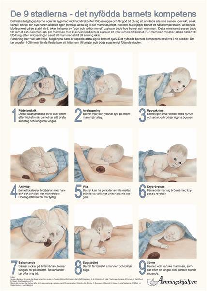 Affisch - De 9 stadierna
