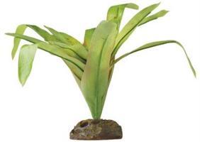 Bromelia, medium