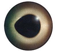 Ögon 13mm