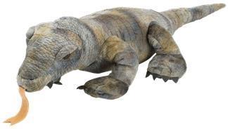 Komodovaran, 60cm