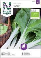 Mangold 'White Silver 3', Organic