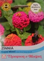 Zinnia 'Cupid Mix'