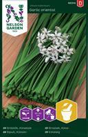 Gräslök Kinesisk 'Garlic Oriental'