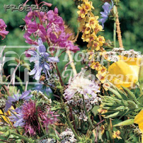Vildblommor 'Meadowland Mix'