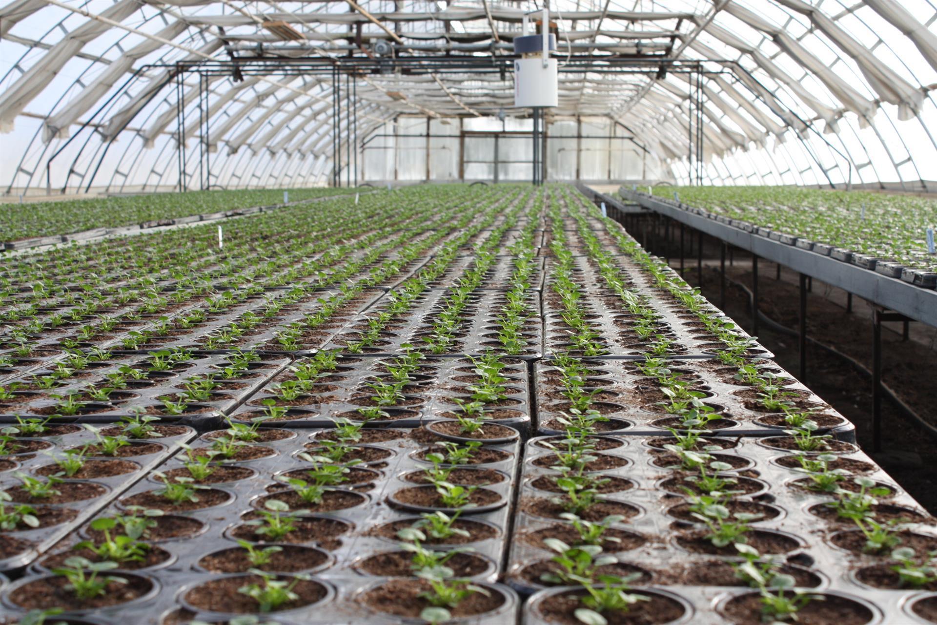 Ny planterade Pensèer, inför våren 2018.